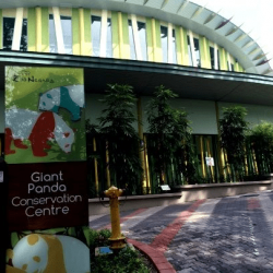 Giant-Panda-and-Other-Related-Works-in-Zoo-Negara-1